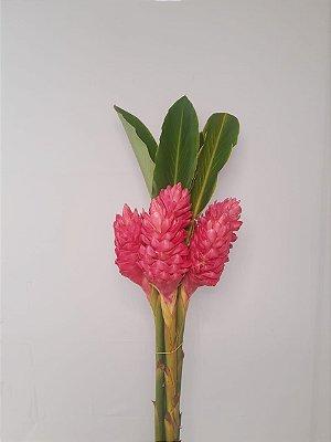 Alpinea Pink - maço