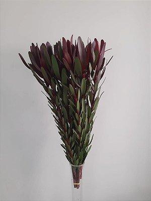 Protea safari -  1 haste