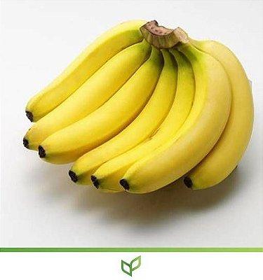 Banana Grande Naine - Lindas Mudas
