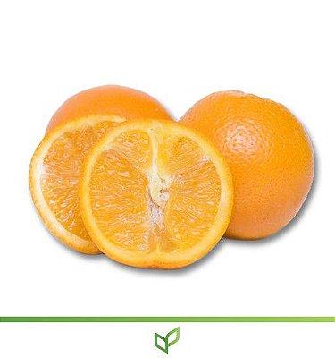 laranja Serra D'Água - Lindas Mudas Enxertadas