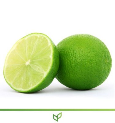 Limão Taiti - Lindas Mudas Enxertadas