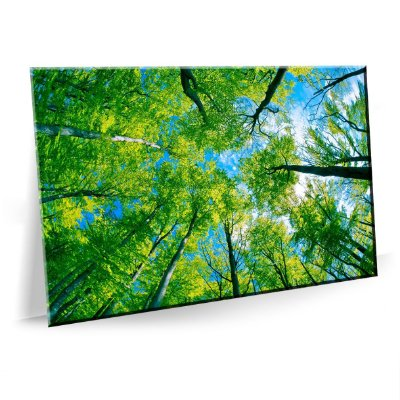 Quadro Floresta Arvores Tela Decorativa