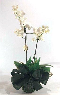 Mini Orquídea