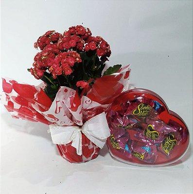 Kalanchue caixa sonho de valsa coração