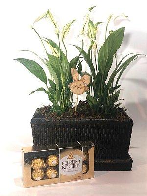 Mini Jardineira com Lírio da Paz + caixa de Ferrero Rocher + Placa Feliz Páscoa