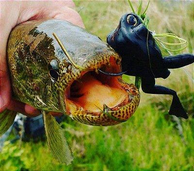 Isca Monster 3X X-Frog Top Water