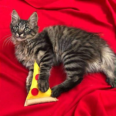 Brinquedo para gatos Pizza com catnip