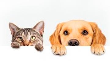 Cachorro e gato vista