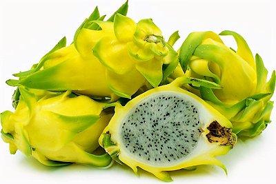 Pitaya Golden Amarela Frutas SEM ESPINHOS - Nova Variedade -  Única Amarela Sem Espinhos - Mudas Clonada