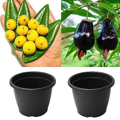 Kit 2 Frutíferas + 2 Vasos de 2,3Litros - Jabuticaba Amarela - Cereja do Rio Grande