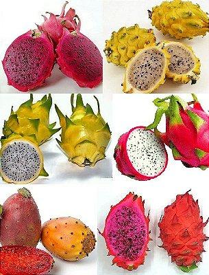 Kit 6 tipos de PITAYA - Amarela - Vermelha Polpa Branca - Saborosa - Vermelha Polpa Vermelha - Dragon Egg - Figo da India