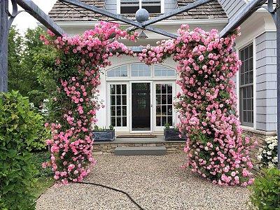 """Kit c/ 3 Tipos de Rosas Trepadeiras em Cachos nas Cores :  Rosa flor Dobrada - Salmão e """"New Dawan"""" (Mescladas Branco e Rosa)"""