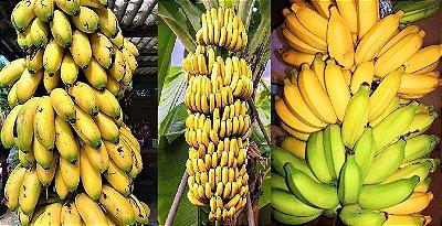 Kit c/ 3 Tipos de Bananas - Ouro - Prata - Nanica