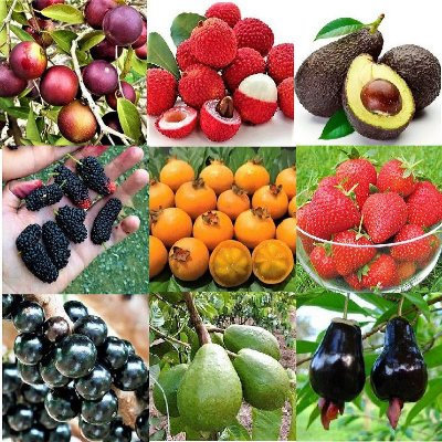 KIT PREMIUM 9 SUPER FRUTAS - Avocado - Lichia - Morango - Goiaba Gigante - Amora Gigante - Jabuticaba -Camu-Camu - Cereja - Guabiroba