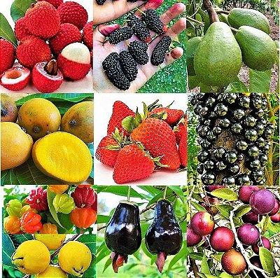 Kit 10 Frutíferas - Lichia - Goiaba Gigante - Amora Gigante - Jabuticaba - Cabeludinha - Morango - Araçá - Pitanga - Acerola - Cereja