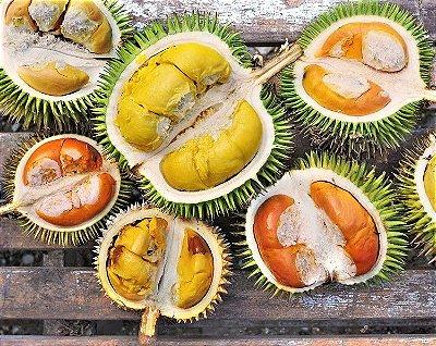 Durião ou Durian