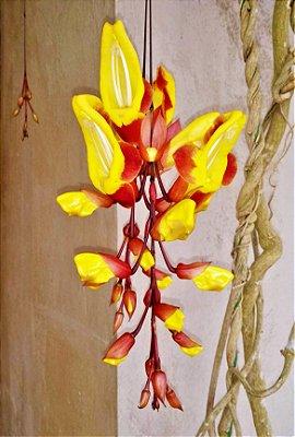 Trepadeira Sapatinho de Judia - Atrai Beija-Flores