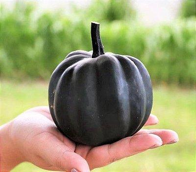 Abóbora Pérola Negra Muito Saborosa - Raridade - kit c/ 4 Sementes