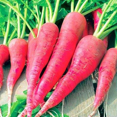 Rabanete Vermelho Comprido - Kit c/ 20 sementes