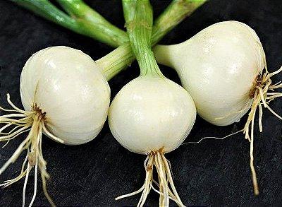 Cebola Branca - Kit c/ 20 sementes