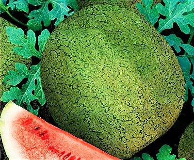 Melancia Omaru Yamato - Kit c/ 12 sementes