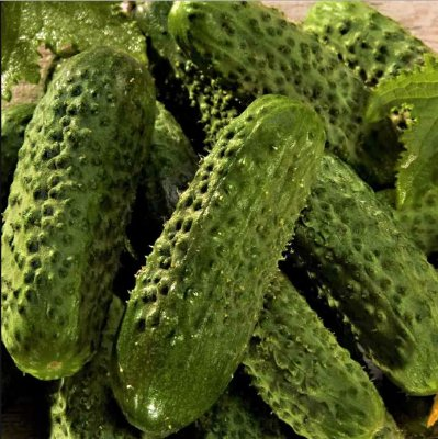 Pepino Toni - Kit c/ 6 sementes