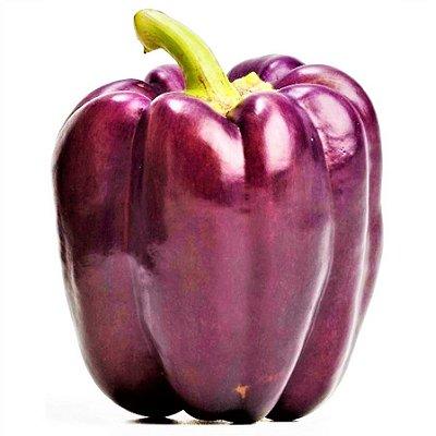 Pimentão Bell Gracepurple - Kit c/ 10 sementes