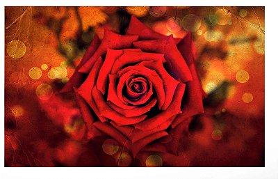 Quadro Flor Rosa Vermelha - Diversos Tamanhos
