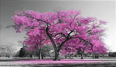 Quadro Arvore da Vida Rosa - Diversos Tamanhos