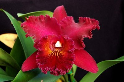 "Blc Chia Lin ""New City"" - Muda T3"