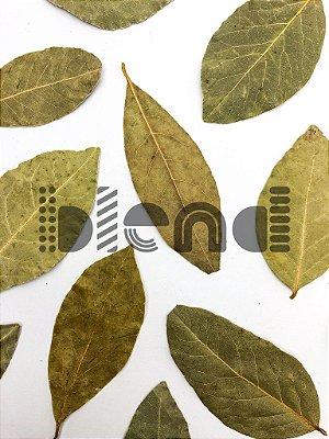 Louro Folhas Selecionado - 250 gramas