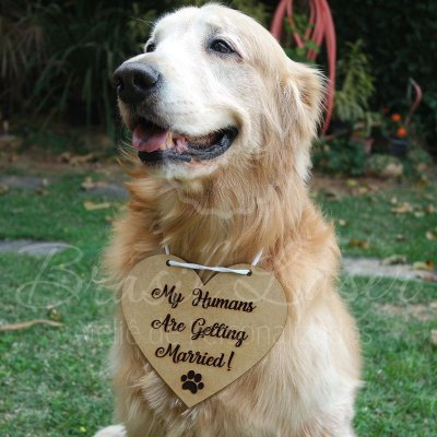 "Plaquinha / Placa para colocar no Cachorro - Com a Frase: ""My Humans Are Getting Married!"""