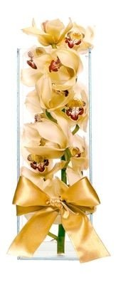 Orquidea moderna - Disponível nas cores: Branca e Lilas