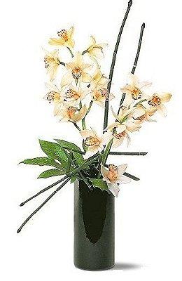 Absolut Orquidea