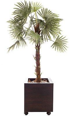 Vaso Palmeira Leque