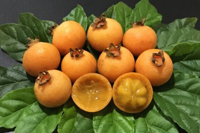 Muda De Guabiroba Deliciosa Fruta Nativa Com 80 Cm + Brinde
