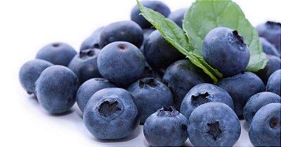 Mirtilo Blueberry Muda de Estaquia já Produzindo C/ 40 cm