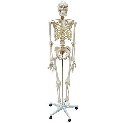 Esqueleto 168 cm, Com Coluna Flexível, Com Suporte e Base Com Rodas TGD-0101-B