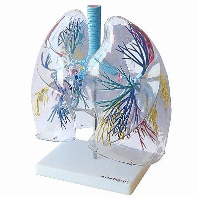 Pulmão Transparente TGD-0319