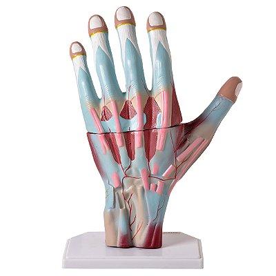 Mão Muscular Ampliada, em 3 Partes TGD-0330-M