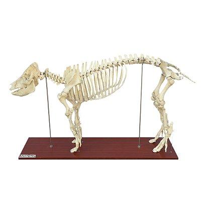 Esqueleto do Porco em Tamanho Natural TGD-0610-P