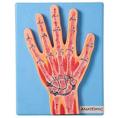 Secção Mediana da Articulação da Mão TZJ-0162-Z