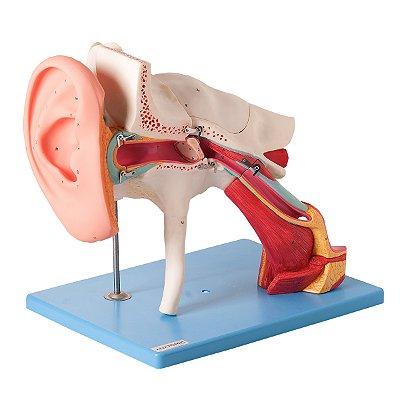 Ouvido Ampliado, Clássico, em 8 Partes TZJ-0309-E
