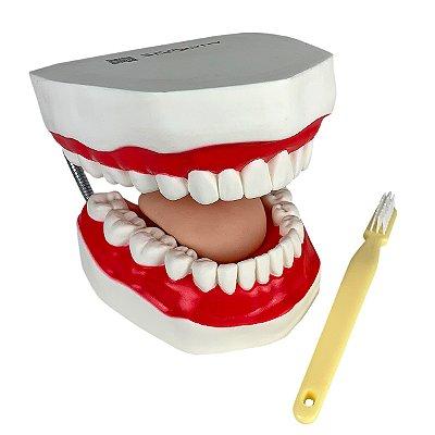 Arcada Dentária com Língua e Escova TZJ-0312-B