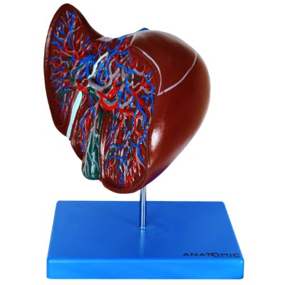 Fígado Luxo TZJ-0324-B