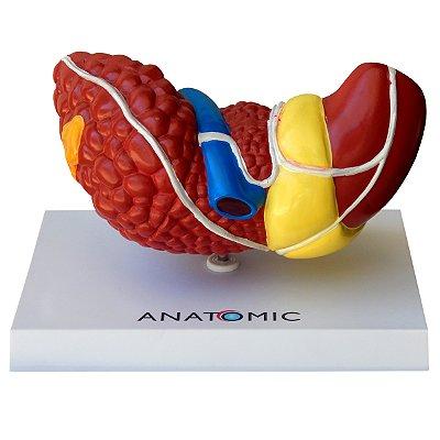 Fígado com Patologia TZJ-0324-P