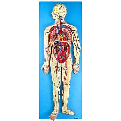 Sistema Circulatório em Placa TZJ-0328-D