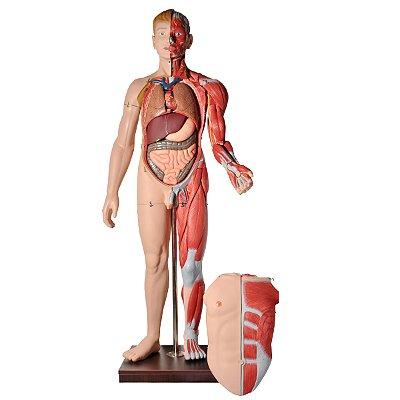 Manequim Muscular de 170 cm, Masculino, com Órgãos Internos, em 32 Partes TZJ-4001-A