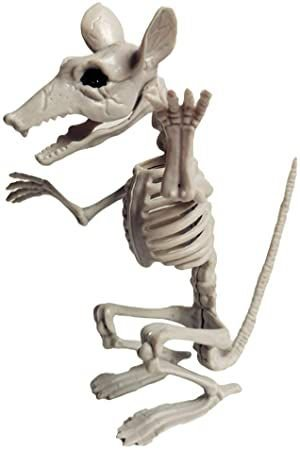 Esqueleto Rato