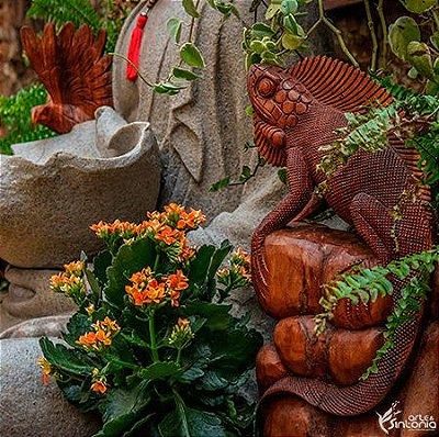 Iguana em Madeira 40cm - Bali